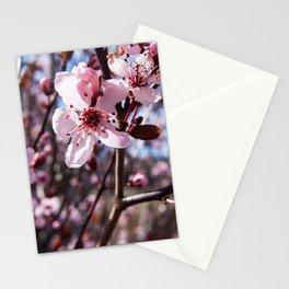 Pink Blossom Photography Print Stationery Cards