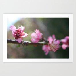 A Bough Of Blurred Peach Blossom Art Print