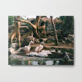 Valencia Swans  Metal Print