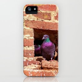 Concept nature : Dove nest in the city wall iPhone Case