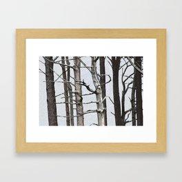 Tree life Part III Framed Art Print
