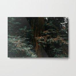 Muir Woods Redwood Metal Print