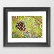 Pine Cone in the Sun Framed Art Print