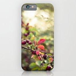 Autumn Glow I iPhone Case