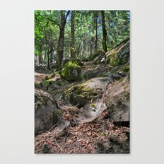 Forest and Webs Canvas Print