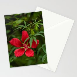 Scarlet Rose Mallow Stationery Cards