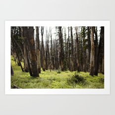 YELLOWSTONE FOREST Art Print
