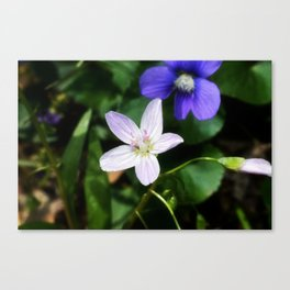 Spring Beauty 11 Canvas Print