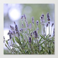 lavender Canvas Prints featuring lavender by Artemio Studio