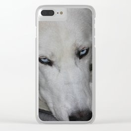 siberian husky in his bed Clear iPhone Case