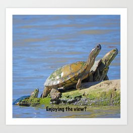 Turtle Trio Funny Art Print