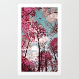 Panther Branch Trail Art Print