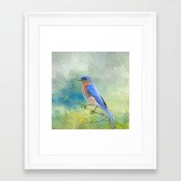 Bluebird In The Garden Framed Art Print