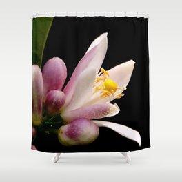 Lemon Buds Shower Curtain