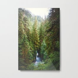 Evergreen River Metal Print