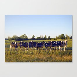 Cows In The Country II Canvas Print