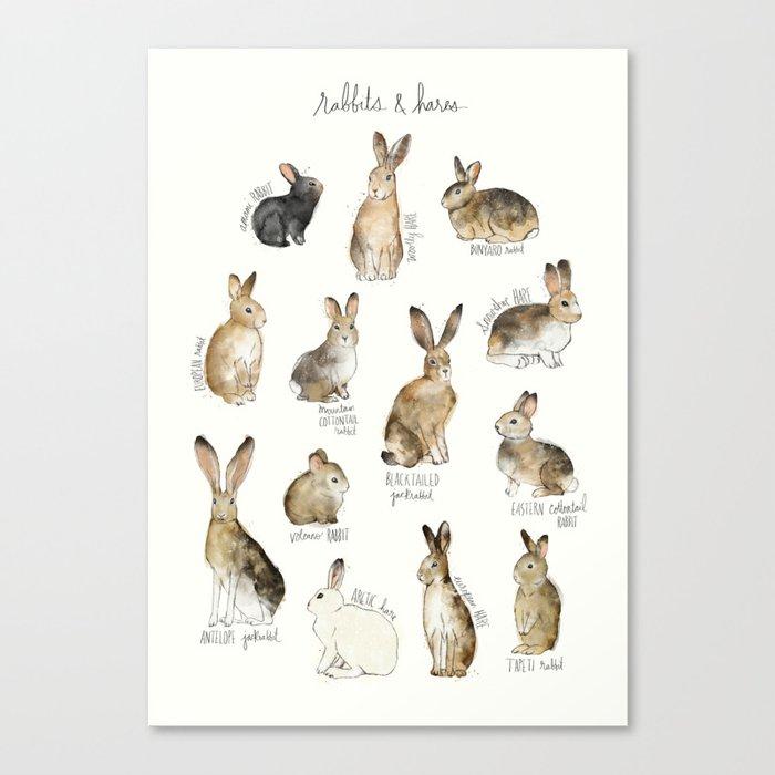 Rabbits & Hares Leinwanddruck