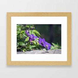Longwood Gardens - Spring Series 143 Framed Art Print