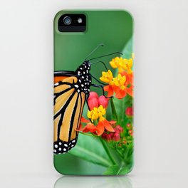 Monarch's Busy Day iPhone Case