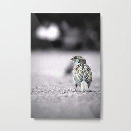 LITTLE SPARROW Metal Print