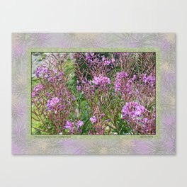 FIREWEED GOING TO LATE SUMMER SEED Canvas Print