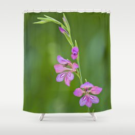 Beauty in nature, wildflower Gladiolus illyricus Shower Curtain