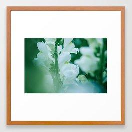 Snap Dragon Flowers Framed Art Print