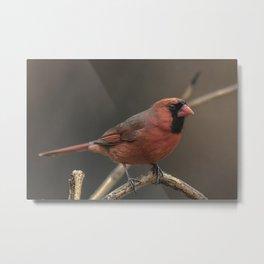 Red cardinal 7686 Metal Print