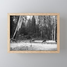 Deer Grazing Peacefully in a Woodland Glade (Black and White) Framed Mini Art Print