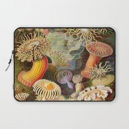 Haeckel Illustration - Marine Life Laptop Sleeve
