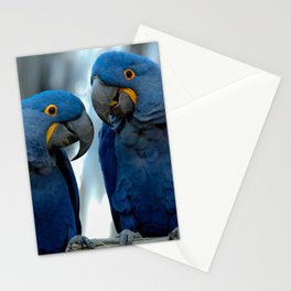 Blue Parrots Stationery Cards