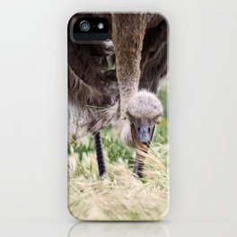 southafrica ... ostrich iPhone Case