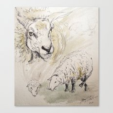 Sheep Sketch #2 Canvas Print