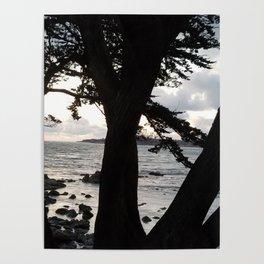 Carmel Beach through Trees Poster
