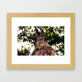 The Branches of Life  Framed Art Print