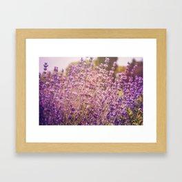 Enchanting Lavender Framed Art Print