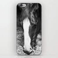 harley iPhone & iPod Skins featuring Harley by Yanina May Photography
