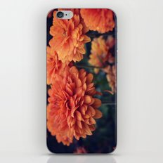 Sweet Orange iPhone & iPod Skin