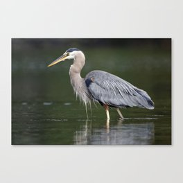Pacific Great Blue Heron | Birds | Nature | Wildlife Photography Canvas Print
