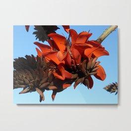Tree, San Diego Metal Print