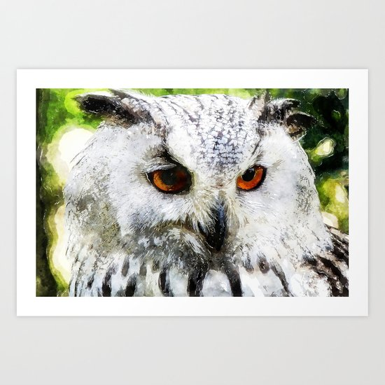 Owl  Animal Bird Watercolor Illustration Art Print