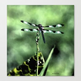 Dragonfly retouched Canvas Print