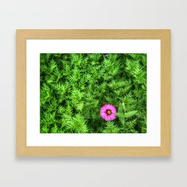 Top view of Yellow cosmos or Sulfur cosmos bush with a blooming pink Zinnia flower. Framed Art Print