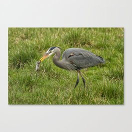 The Heron's Catch Canvas Print