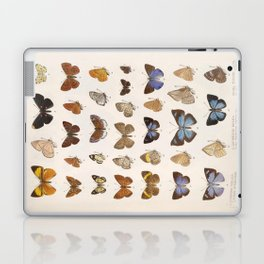 Vintage Scientific Insect Butterfly Moth Biological Hand Drawn Species Art Illustration Laptop & iPad Skin