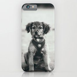 Puppy | Puppy Love | Dog | Doggy | Black and white photography | Dog in a beach | Fluffy cute puppy  iPhone Case