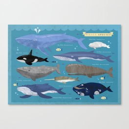 Whale Species Canvas Print