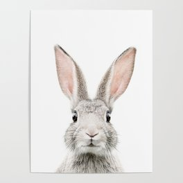 Bunny face Poster