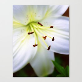 White Easter Lily Close Up Canvas Print