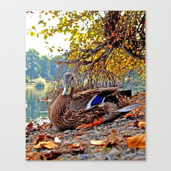 Autumn lake duck Canvas Print